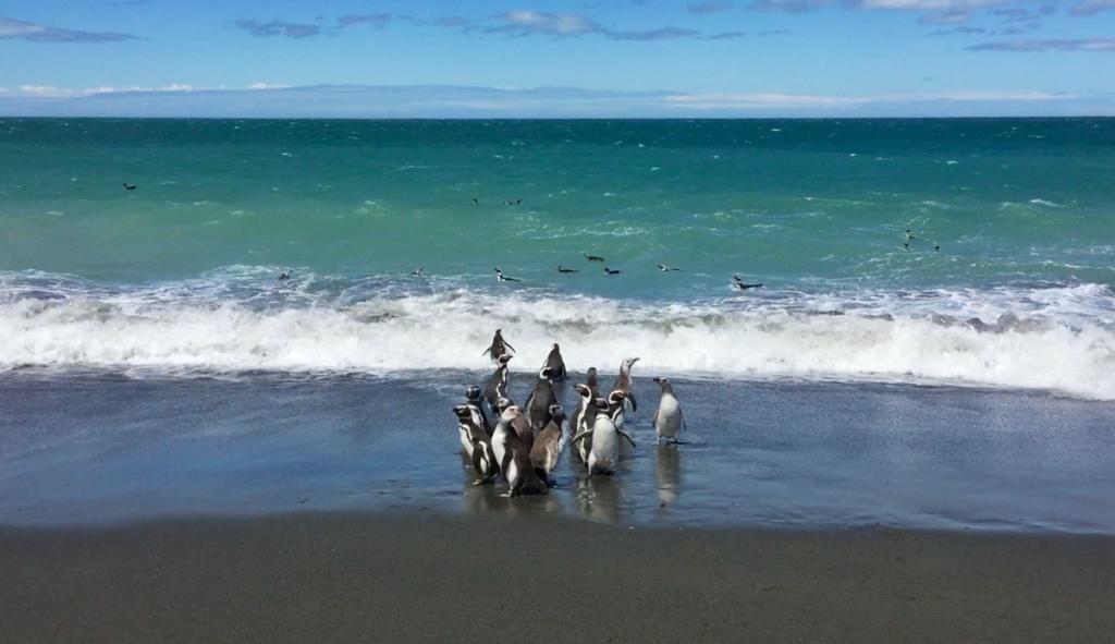 Cabo Virgenes pinguini patagonia