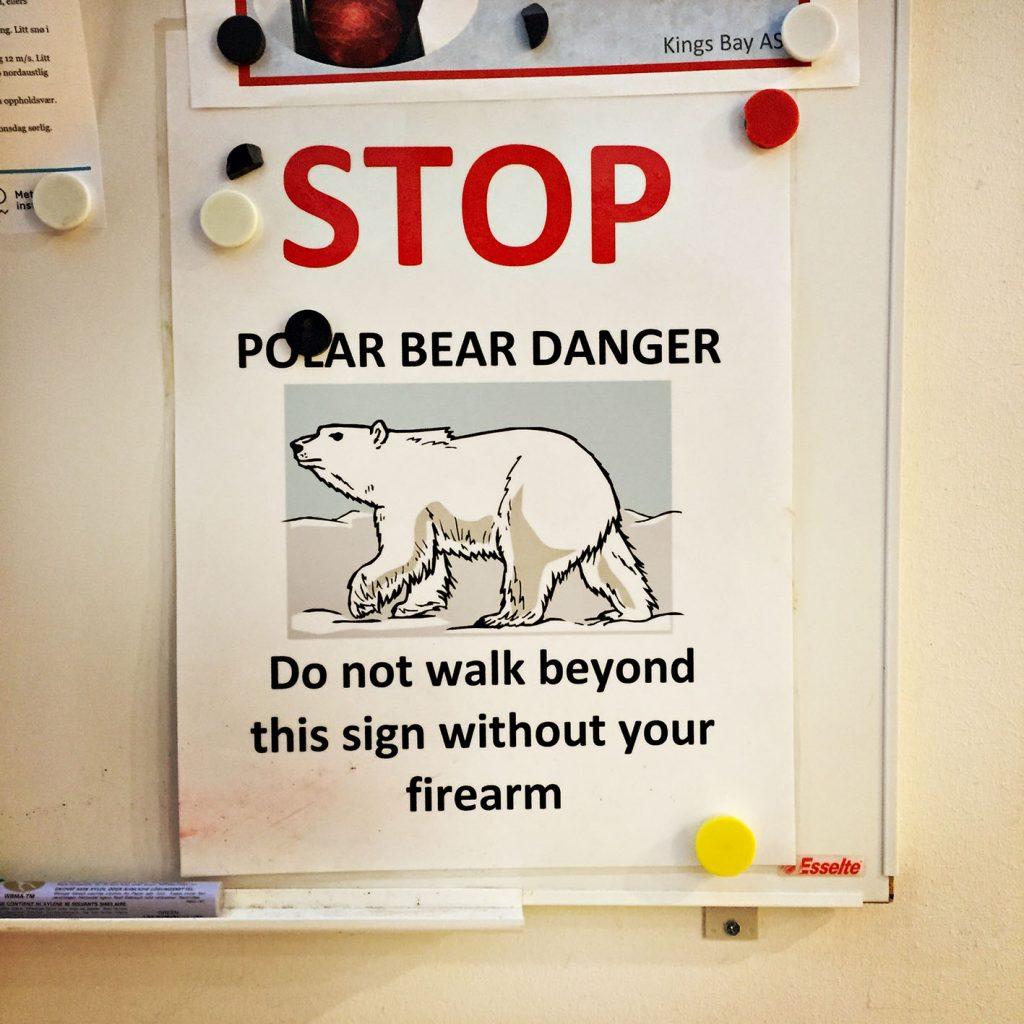 viaggio al polo nord orsi polari