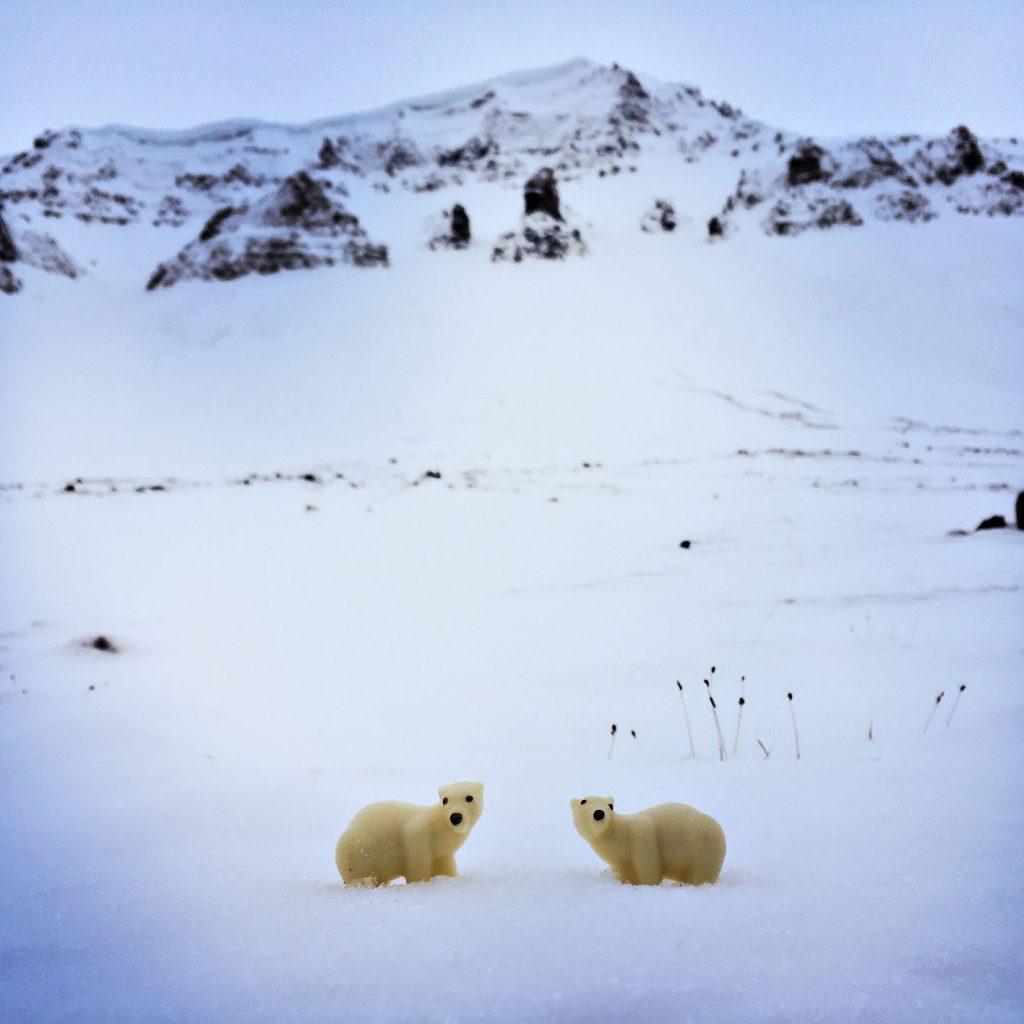 viaggio al polo nord orsi polari cioccolato